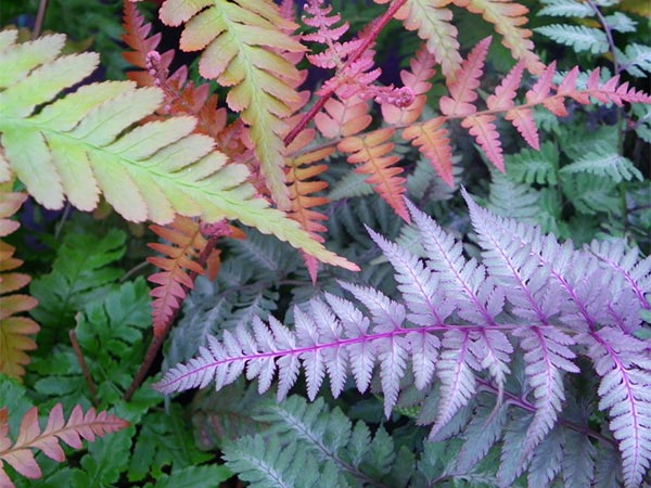 close-up image of colourful fern leaves